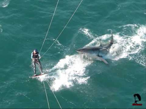 Large Shark Attacks Woman Kitesurfer in Western Australia