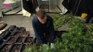 Police Bust Cannabis Factory - Cannabis: What's The Harm? Preview - BBC Three