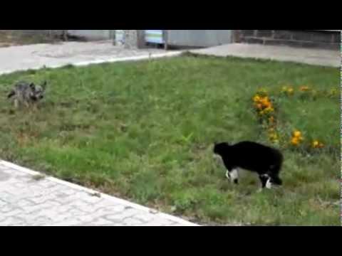 Cat Vs Dog FIGHT!