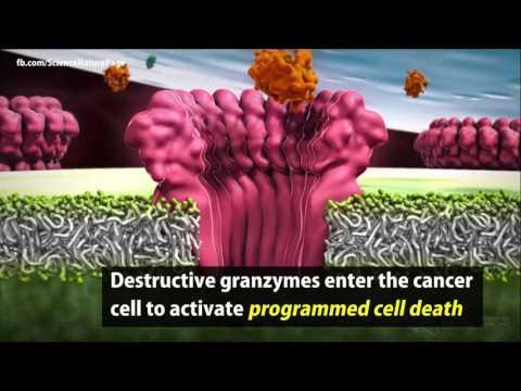 L Arginina i T komórki