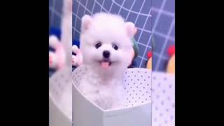 cute and funny dog videos 2021 #pet lover#stress reliever# cute dogs