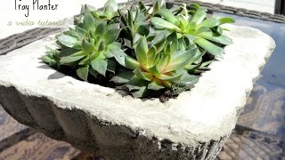 Diy Concrete Planter Tray