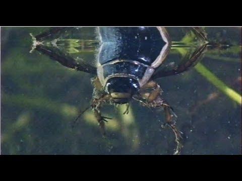Водная жизнь - Познавательные и прикольные видеоролики