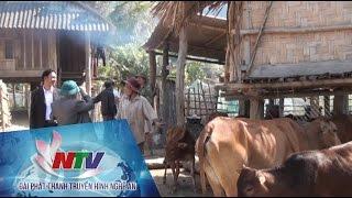 Kỳ Sơn: Kiên quyết di dời chuồng trại trâu, bò ra khỏi khu vực dân cư