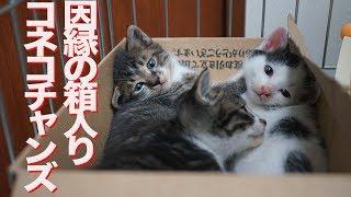 ウチューネコチャン、子猫教室1期生を迎え入れる The rescued kitten brothers
