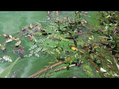 Toxic algae found in Milwaukee's Veterans Park lagoon