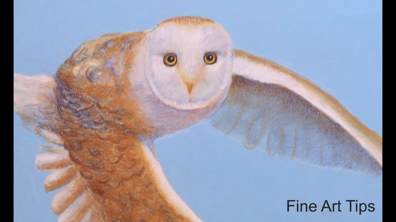 How To Draw A Barn Owl Flying  With Pastel Color Pencils