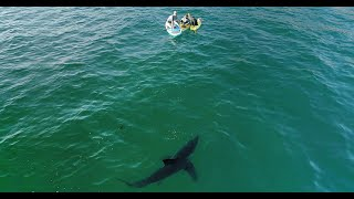 Great White Sneaks Up on Family: My Drone Alerts Them of the Shark