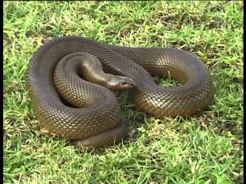Some snakes of the Pilanesberg