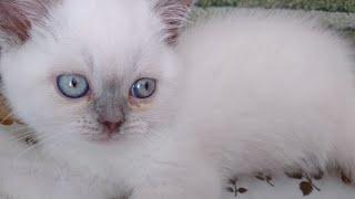 Котёнок ЛЮСЯ супер кошка ВИДЕО для детей РАЗВЛЕЧЕНИЯ Вес котёнка Cat