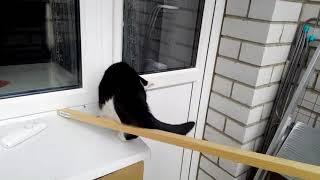 Наши уроки как научить кошку ходить по бревну