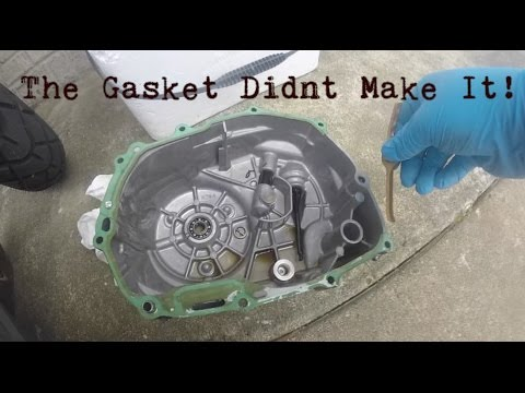 Grom Clutch Side Gasket Change | Recruited The Wife's Help