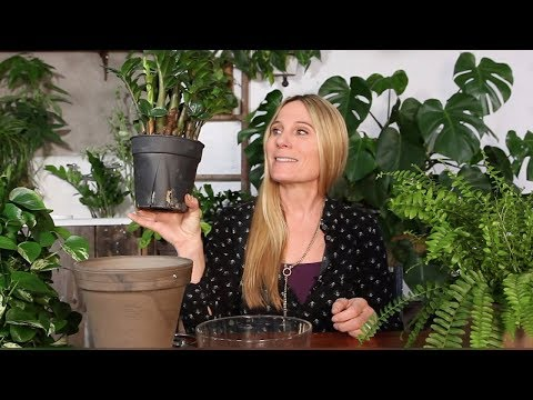 POTTING AN INDOOR PLANT | ZZ PLANT, POTHOS AND POTTING SOIL TIPS