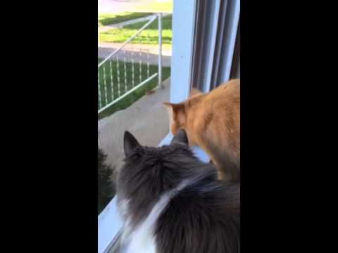 Mia And MiMi Chat With Chipmunk