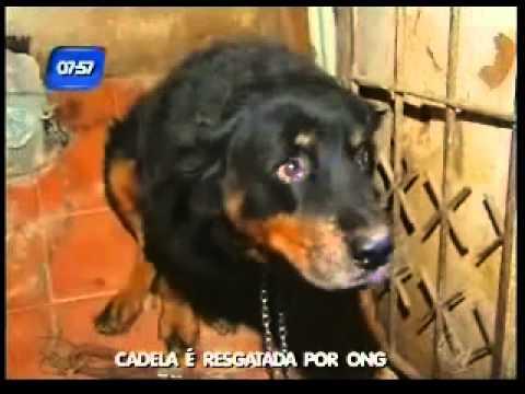 Cadela rottweiler resgatada ap�s confinamento em Salvador