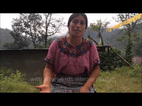 Local solutions for climate change adaptation and coffee rust management in Huehuetenango Guatemala