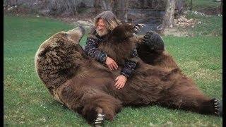 Охота на охотника.  Гибель человека - медведя.