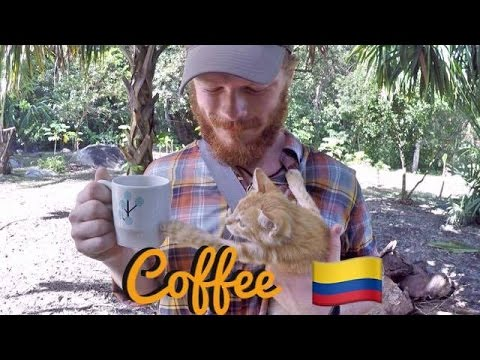 Where Coffee Comes From- Colombian Coffee Farm
