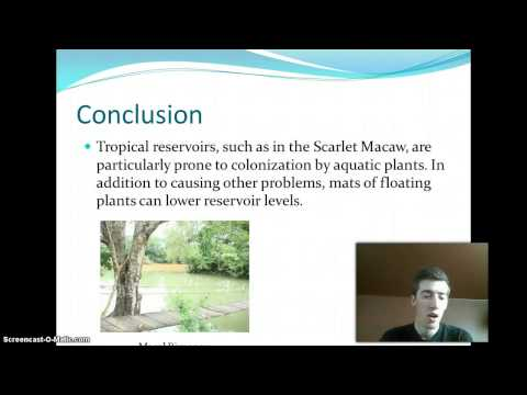 Water Pollution Conclusion   UF 300