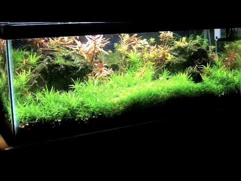 Planted fish tank aquarium 20 gallon long made a mistake for Freshwater fish for 20 gallon tank