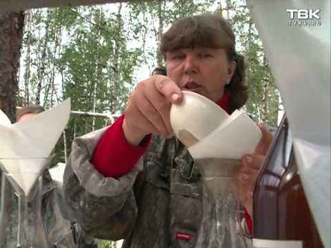 В Красноярском крае обнаружили новые месторождения золота