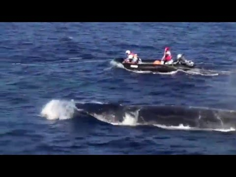 "Maui Ocean Center Sea Talk: Ed Lyman ""Large Whale Entanglement Response"""