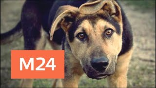 Неравнодушные москвичи спасли собаку, которую хозяин запер на балконе - Москва 24