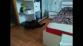 Что делает кот когда нас нет дома