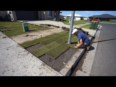 How To Lay Turf (Sod) // TifTuf Bermuda (Couch)