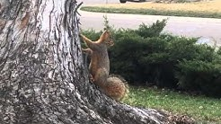 Rabid squirrel