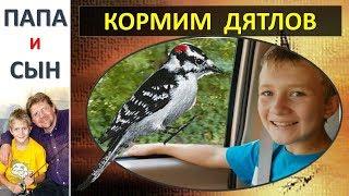 Вова кормит птиц, Корм для дятлов, Покупка в магазине Папа и Сын. Алексей и Вова Савченко.