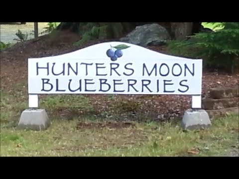 Blueberry Farm for sale, Whidbey Island 2013