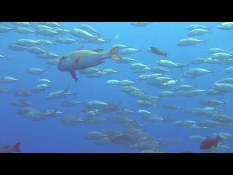 Marine life of Palau