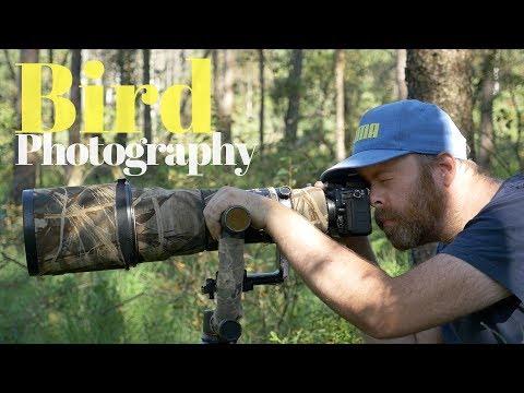 How to photograph small birds | BIRD PHOTOGRAPHY - tutorial thumbnail