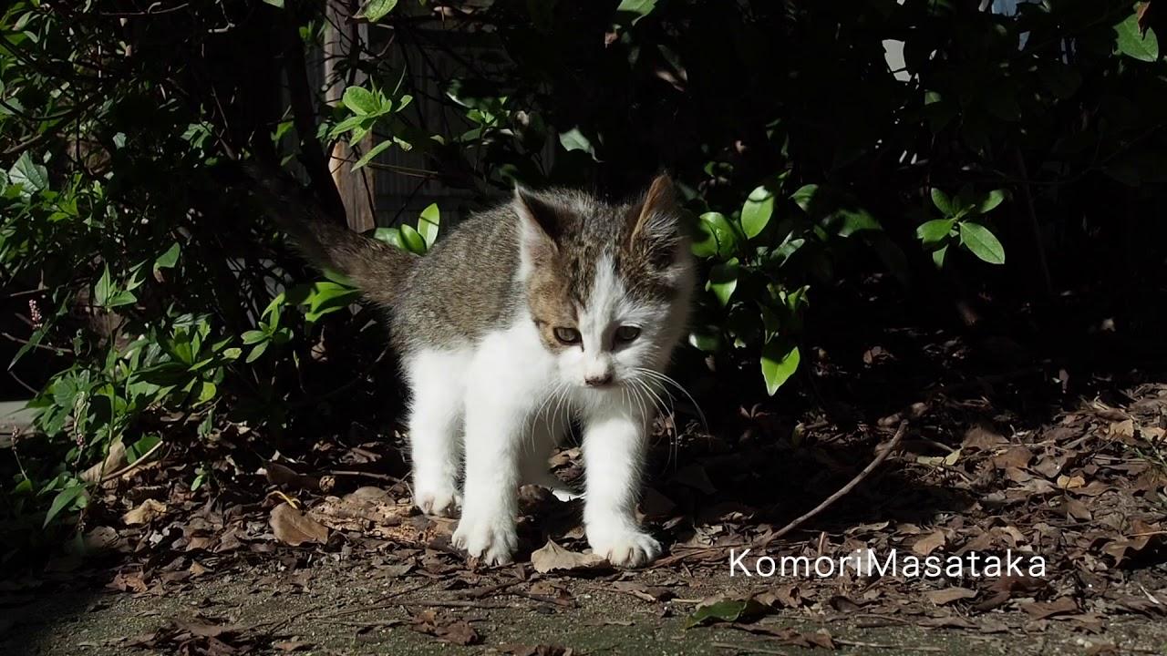 子猫は好奇心旺盛