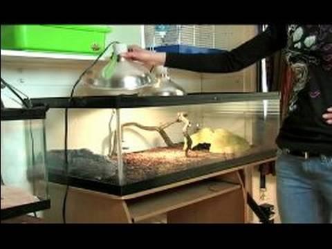 Reptile Terrarium Setup : Reptile Terrarium Animal Cage Set Up - Reptile Terrarium Setup : Reptile Terrarium Animal Cage Set Up