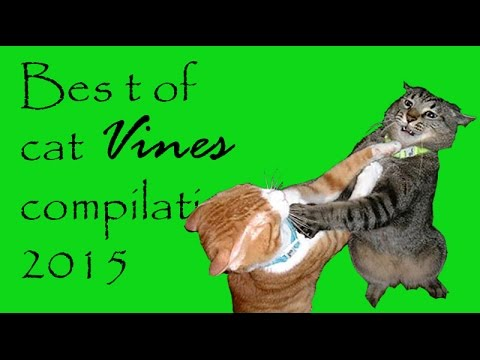 Best of cat vines compilation 2015