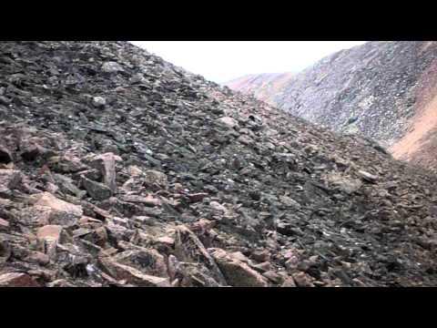 Black Bear on Culebra Peak - 1