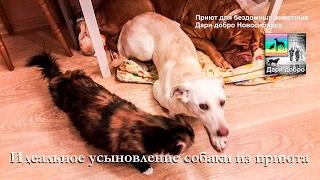 Собаку из приюта забрали домой | Идеальное усыновление бездомной собаки | animal shelter in Novosib
