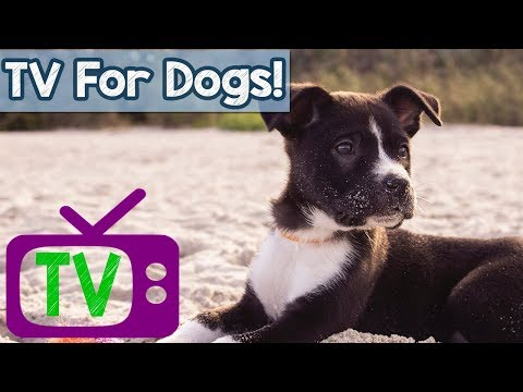 A Video for Dogs - Virtual Dog Walk with Relaxing Music and