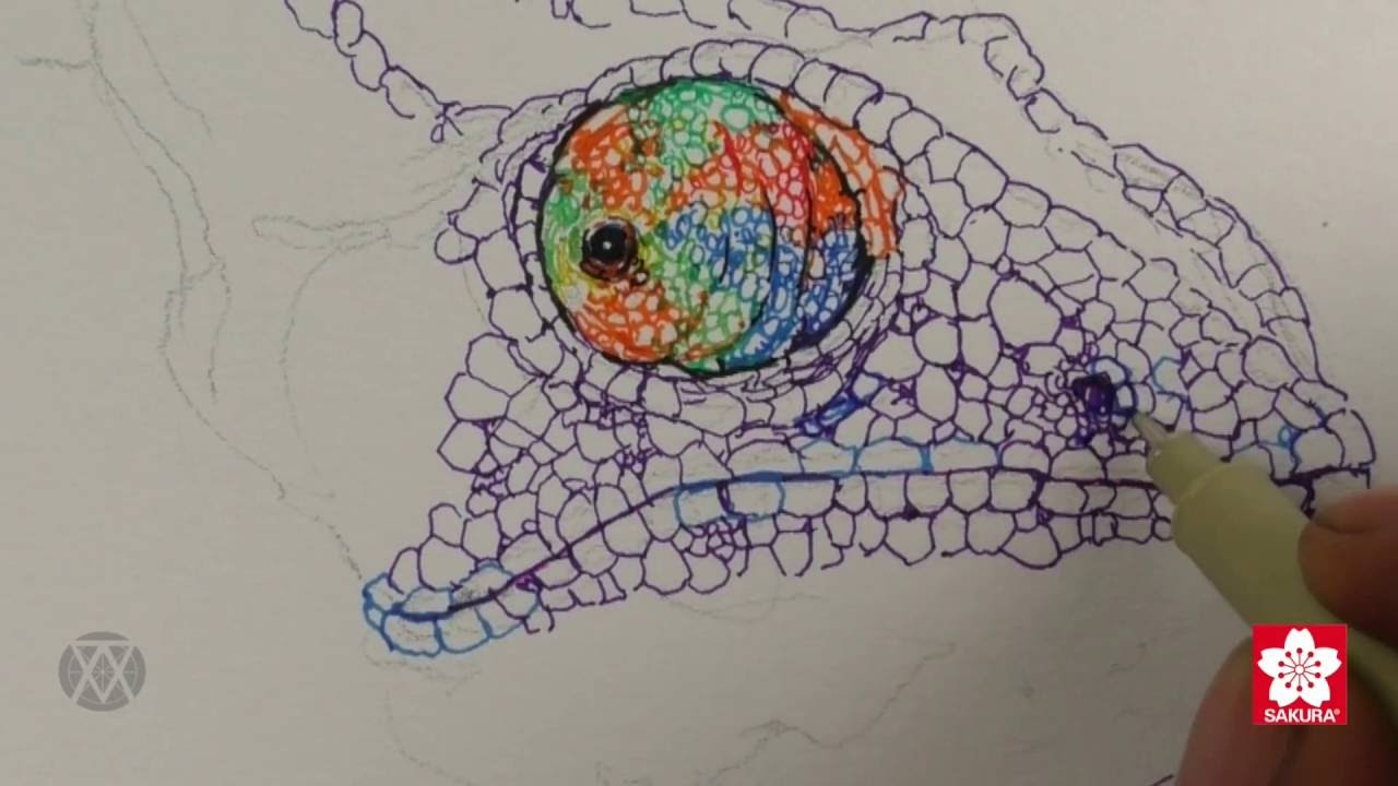 dd4afa6cd Learn to Draw a Colorful Chameleon - YouTube