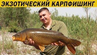 Незабываемая рыбалка на оз. Кинерет. Карпфишинг 2018