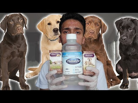 Parvo Treatment At Home For Dogs / Puppies With Parvovirus