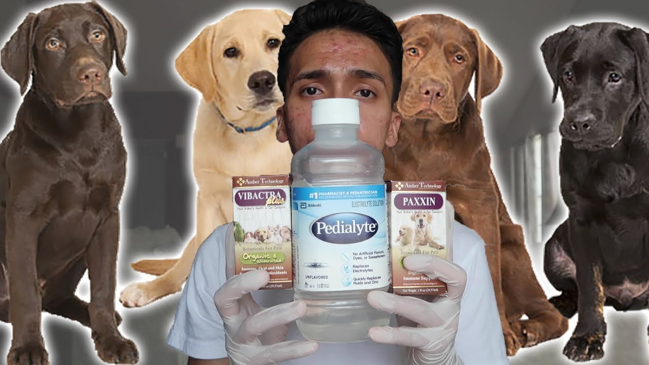 How To Cure Your Dog From Parvo At Home Youtube