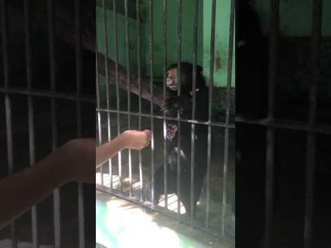 myanmar Zoo