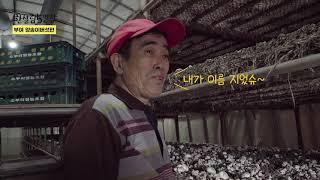 [한살림5일장]부여 생산지 이야기_양송이버섯편 이 영…