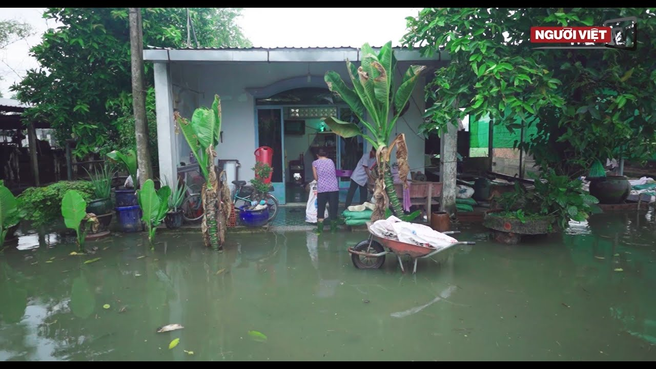 Khu dân cư ở Sài Gòn khốn khổ vì nước ngập cả tháng không rút | Phóng sự Việt Nam