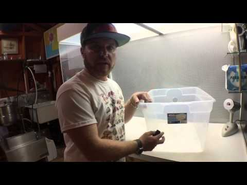 DIY How to make a mushroom monotub grow fresh fungi at home