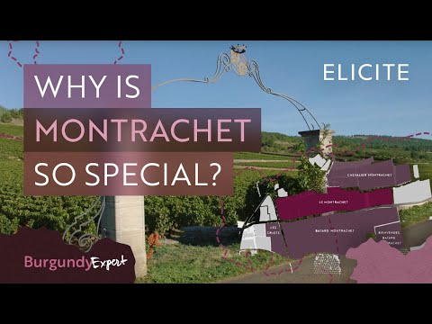 wine article The Most Expensive White Wines In The World A Guide To Montrachet Wines