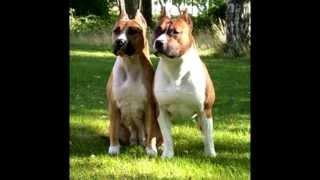 Top 12 De Las Mejores Razas De Perros Parte 1